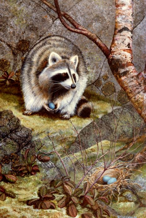 Raccoon Found Treasure  Painting